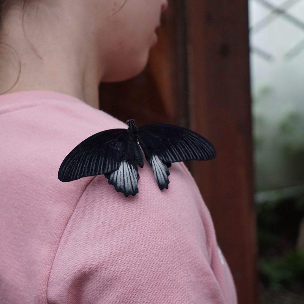 La casa delle farfalle di Milano Marittima