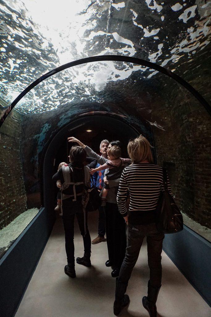 acquario-livorno-aquile-di-mare-tunnel
