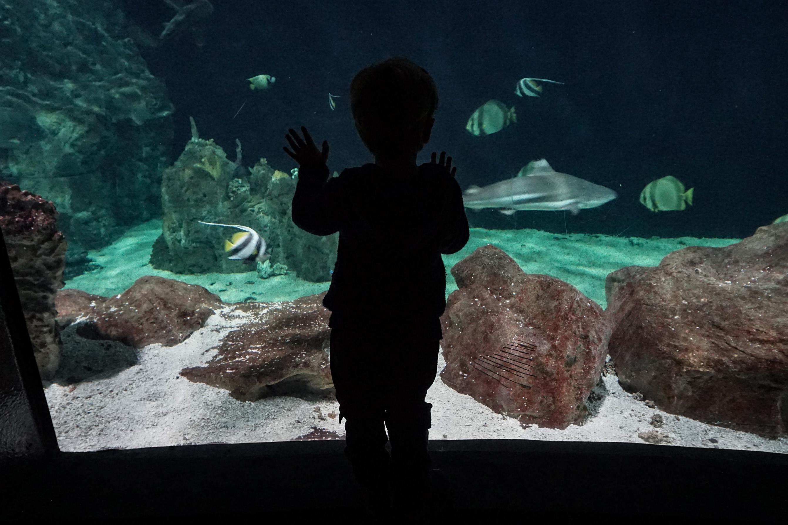 Tartarughe, squali, rettili e insetti: un tuffo nella natura all'Acquario di Livorno