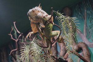 acquario-livorno-iguana