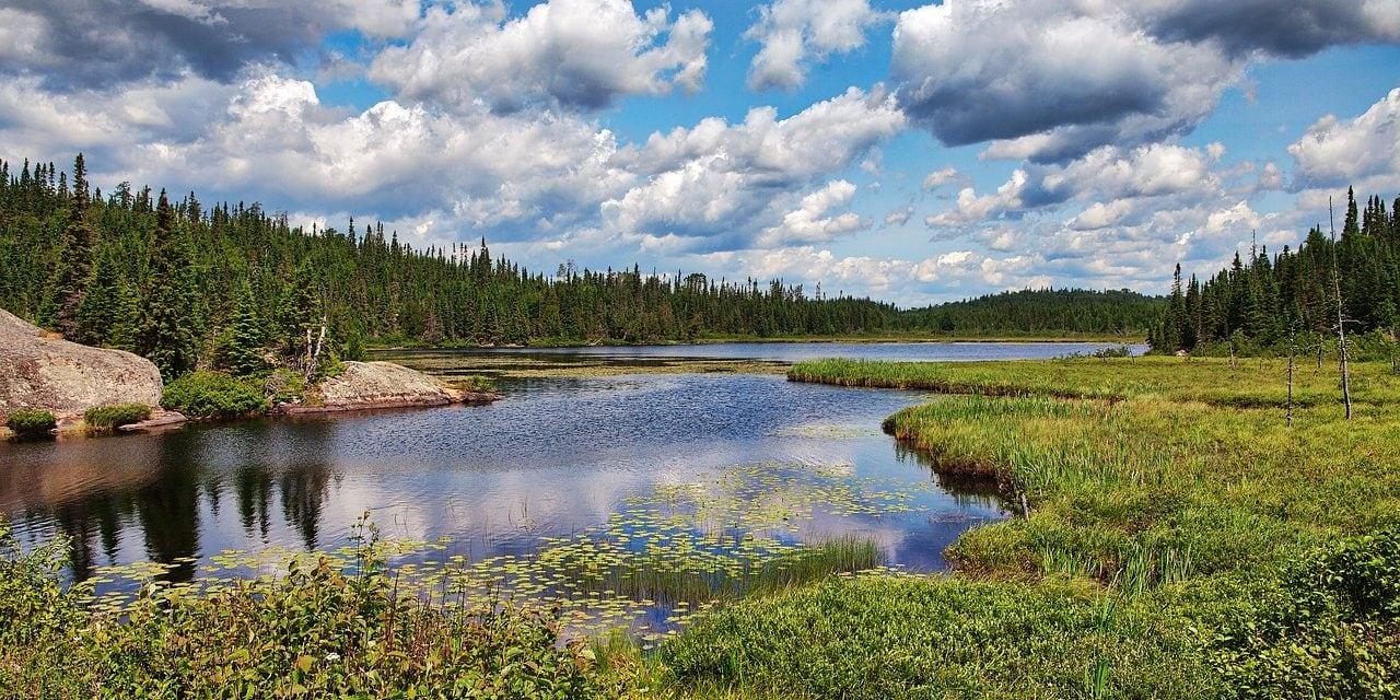 Viaggio al centro della Natura: esplorare l'Algonquin Provincial Park in Canada