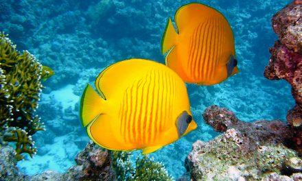 Snorkeling nella Grande barriera Corallina: le migliori spiagge dove farlo